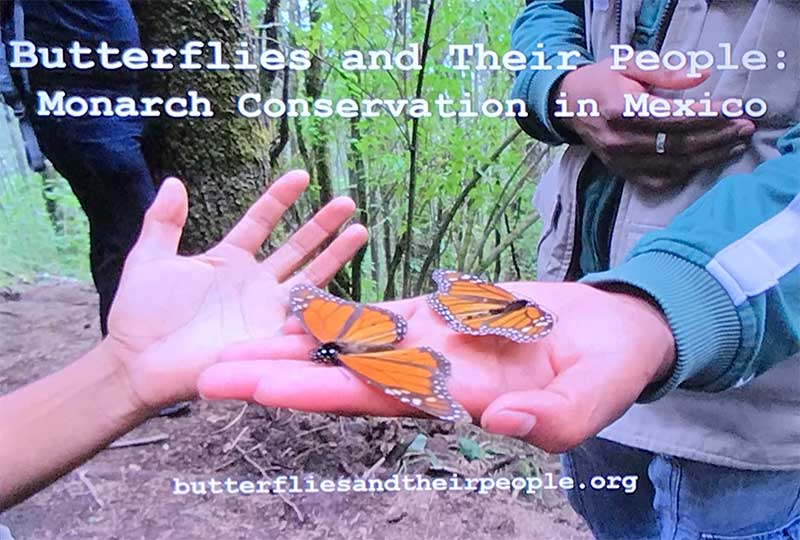 International Butterfly Breeders Association, Inc. Journey to Mexico