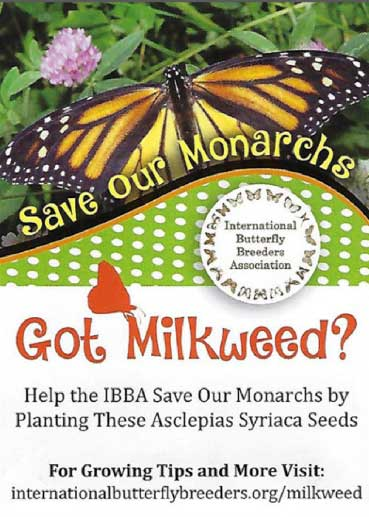 IBBA Special Pack: Common milkweed, Asclepias syriaca