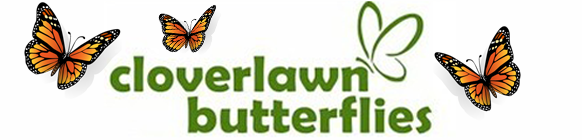 Cloverlawn Butterflies