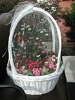 Bflybaskweb