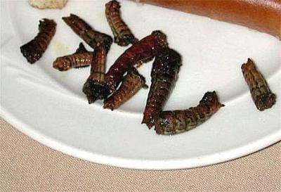 LarvaeWeb