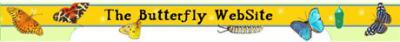 butterflywebsite