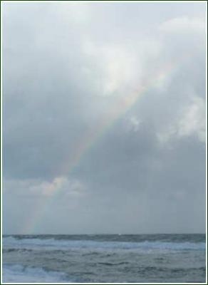 cdp rainbow