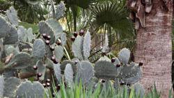 Alamo cactus garden 1 th