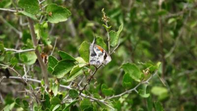 Field trip find Libytheana bachmanii  Snout butterfly